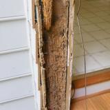 Cara membasmi rayap kayu kering