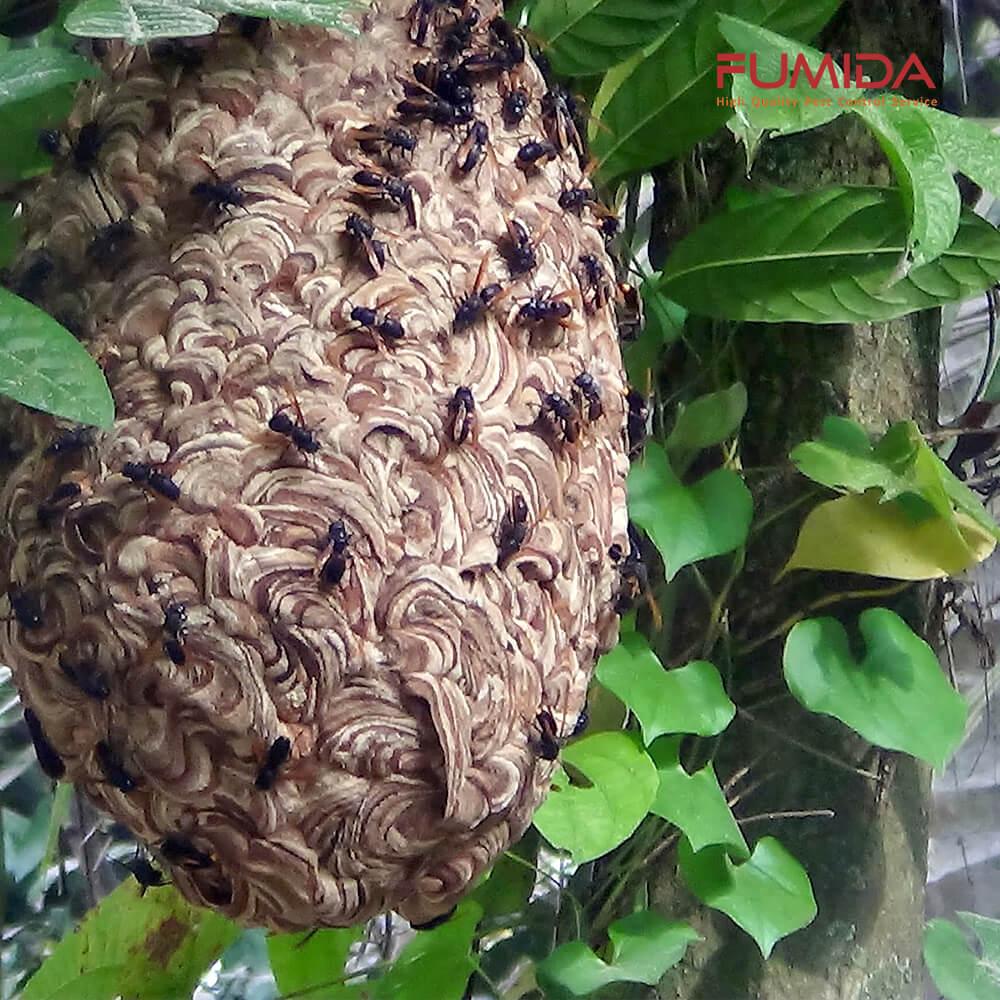 sarang-tawon-vespa.jpg
